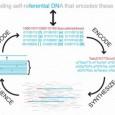 Si se faire écrire son prénom sur un minuscule petit grain de riz impréssionnait déjà, voilà de quoi s'effarer puisque des chercheurs ont réussi l'exploit de stocker des données informatiques dans un gramme d'ADN synthétique