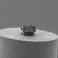 Elle mesure seulement 20 x 10 x 15 micromètres...