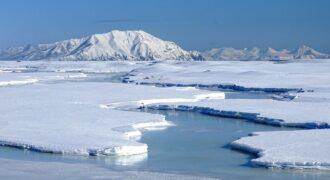[Pas Détente] 2050 : la date butoir théorique pour les animaux vivant en Arctique ! (les choses qu'on dit, les choses qu'on fait…)